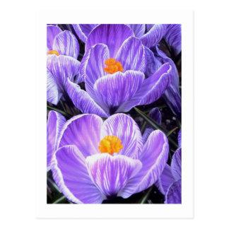 "Flower Photography - ""Purple Flower 05"" Postcard"