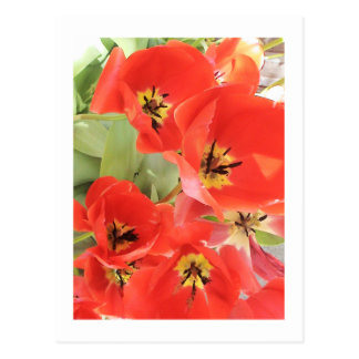 "Flower Photography - ""Red Flower 03"" Postcard"