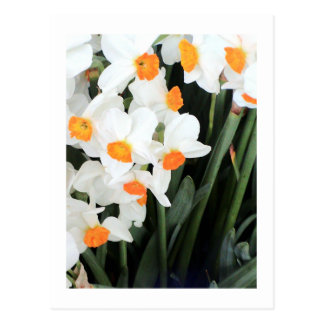 "Flower Photography - ""White Flower 06"" Postcard"