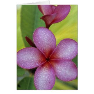 Flower, Plumeria sp.), South Pacific, Niue Card