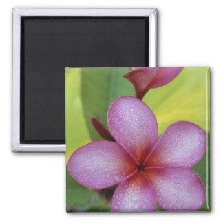 Flower, Plumeria sp.), South Pacific, Niue Magnet