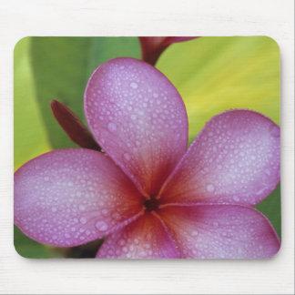 Flower, Plumeria sp.), South Pacific, Niue Mouse Mat
