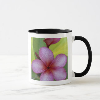 Flower, Plumeria sp.), South Pacific, Niue Mug