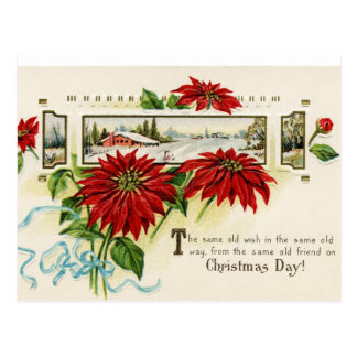 Flower Poinsettia Postcards