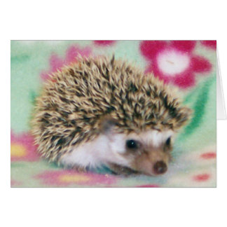 Flower Power Hedgehog Cards