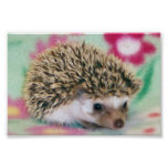 Flower Power Hedgehog Poster