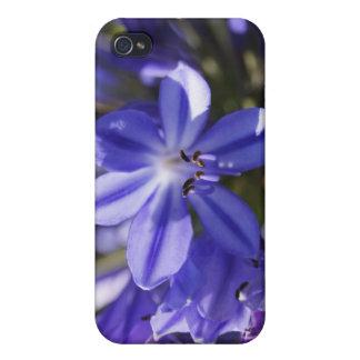 Flower Power & Nature iPhone 4 Case - Blue Agapant
