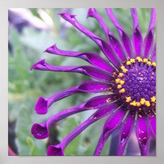Flower Power Spider Purple Poster