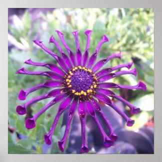 Flower Power Spider Purple Posters