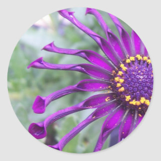 Flower Power Spider Purple Stickers