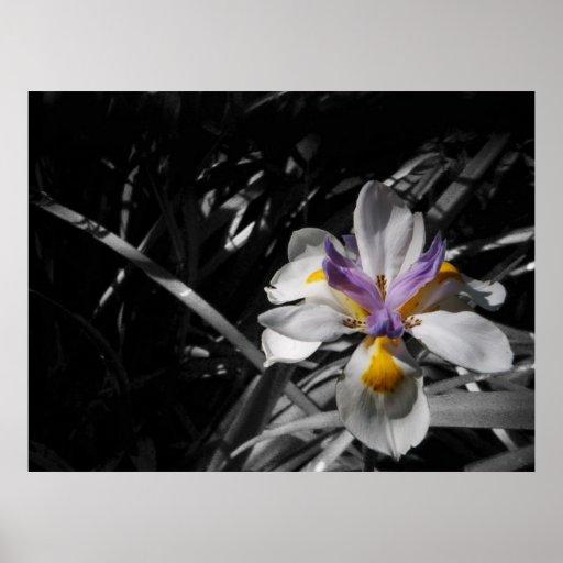 Flower - Purple Yellow White Poster