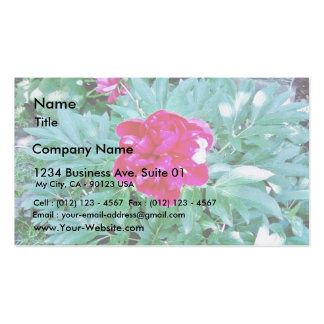 Flower Red Bozur Pack Of Standard Business Cards