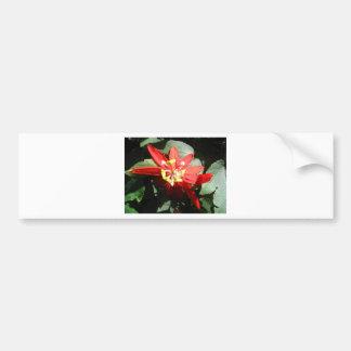 flower,red passion flower bumper sticker