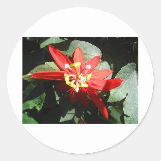 flower,red passion flower round sticker