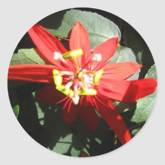 flower red passion flower stickers