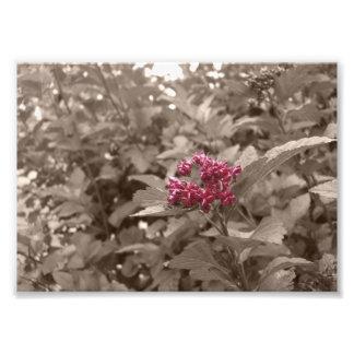 Flower Sepia Edit Print Photographic Print