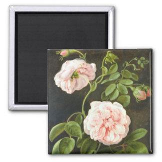 Flower Study Square Magnet
