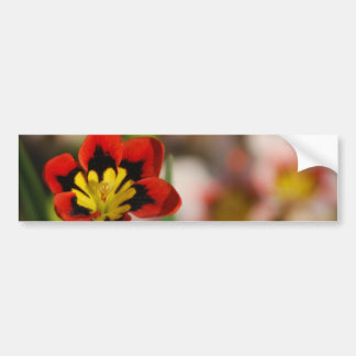 Flower to be cherished bumper stickers