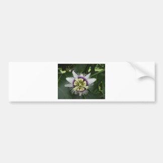 Flower Tree.JPG Bumper Sticker