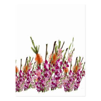 Flower VERCORDIA Show Postcard
