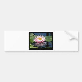 Flower  Water lily Car Bumper Sticker