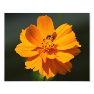 Flower with small Bee Photo Print.
