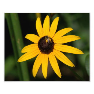 Flower with Small Bee Photo Print