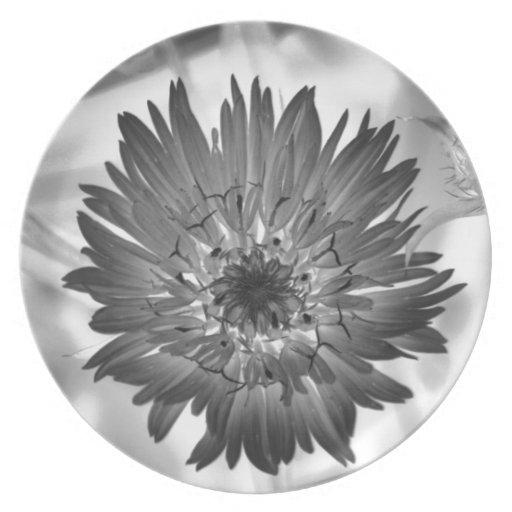 flower xray plates