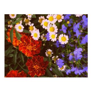 Flowerbed card postcard