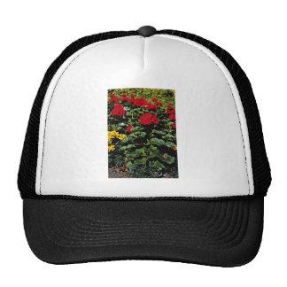 Flowerbed  flowers hat