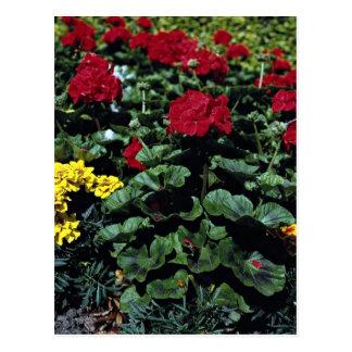 Flowerbed Post Card