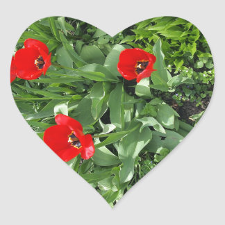 Flowerbed with red tulips heart sticker