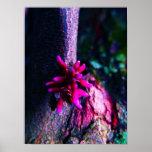 Flowering Bark 2 Poster