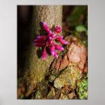 Flowering Bark Print