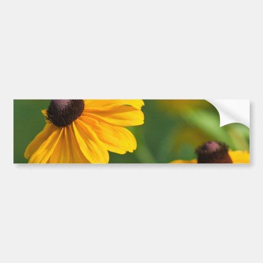 Flowering Black Eyed Susans Bumper Sticker