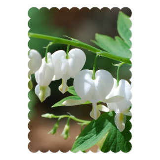 Flowering Bleeding Heart 5x7 Paper Invitation Card