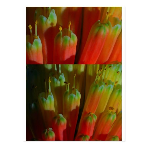 Flowering BUDS : Cactus Wild :  Greetings,Goodluck Postcards