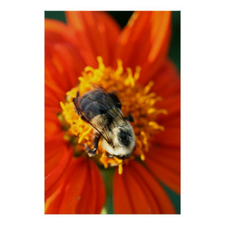 Flowering Bumblebee Poster