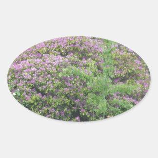 Flowering Bush Oval Sticker