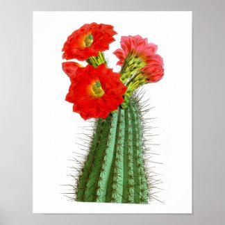 Flowering Cactus No2 Vintage Natural History Print