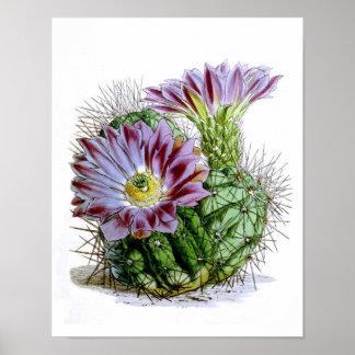 Flowering Cactus No4 Vintage Natural History Print