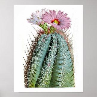 Flowering Cactus No6 Vintage Natural History Print
