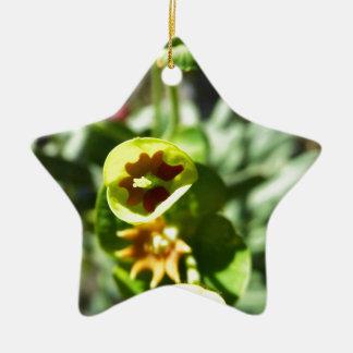Flowering Ceramic Star Decoration