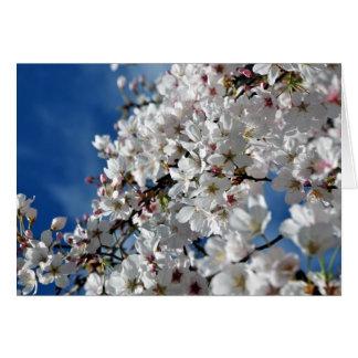 Flowering Cherry Tree Card