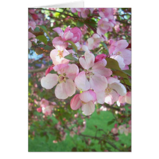 Flowering Crab-apple Blossoms Card