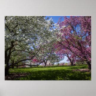 Flowering Crabapple Trees Poster
