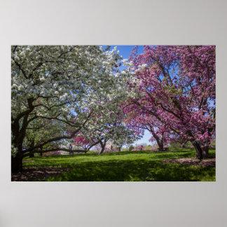 Flowering Crabapples Poster