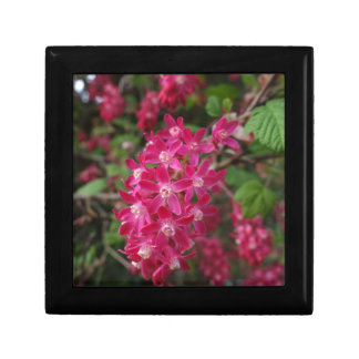 Flowering Currant Gift Box