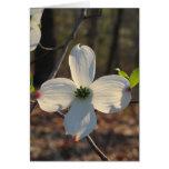 Flowering Dogwood - Customised Greeting Cards