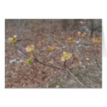 Flowering Dogwood Notecard Card